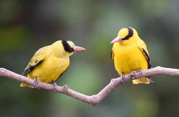 观赏鸟价格_最新观赏鸟价格行情走势