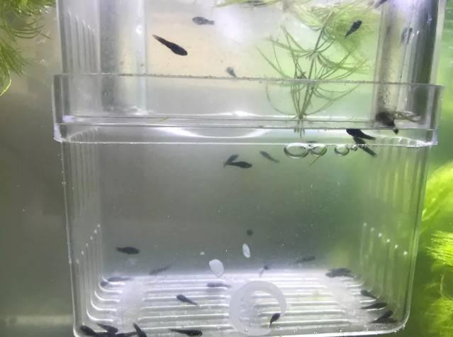 每个鱼友心里都有一个草缸梦