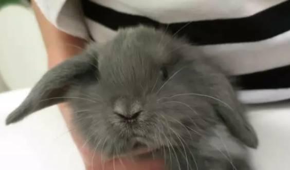 应该给宠物兔洗澡吗