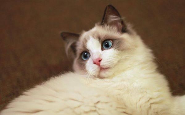 猫球虫病有什么症状
