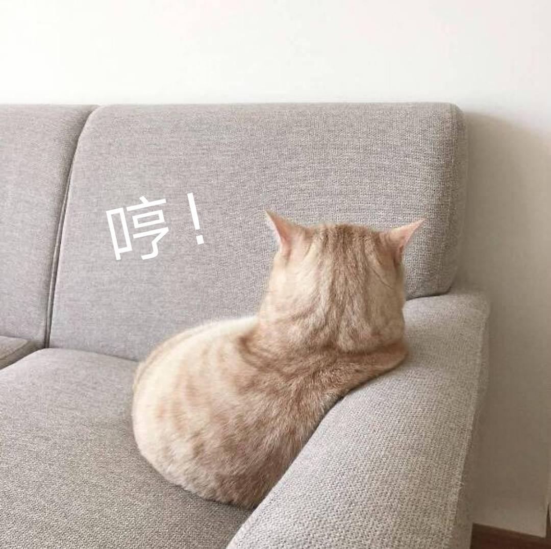 可爱小猫咪只给我看背景哈哈