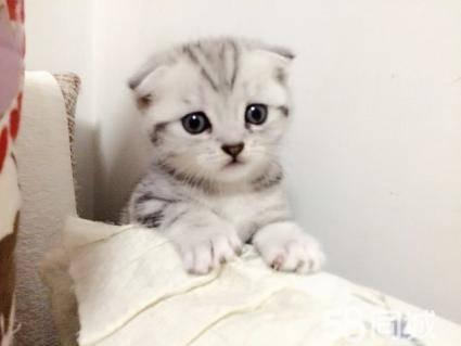 小猫多久断奶,猫几个月断奶,断奶时可采用母猫与仔猫相隔离的方法