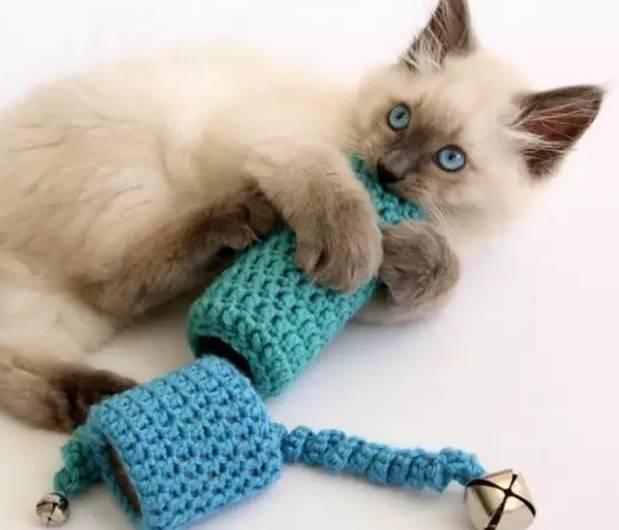 猫咪常见口腔疾病防治
