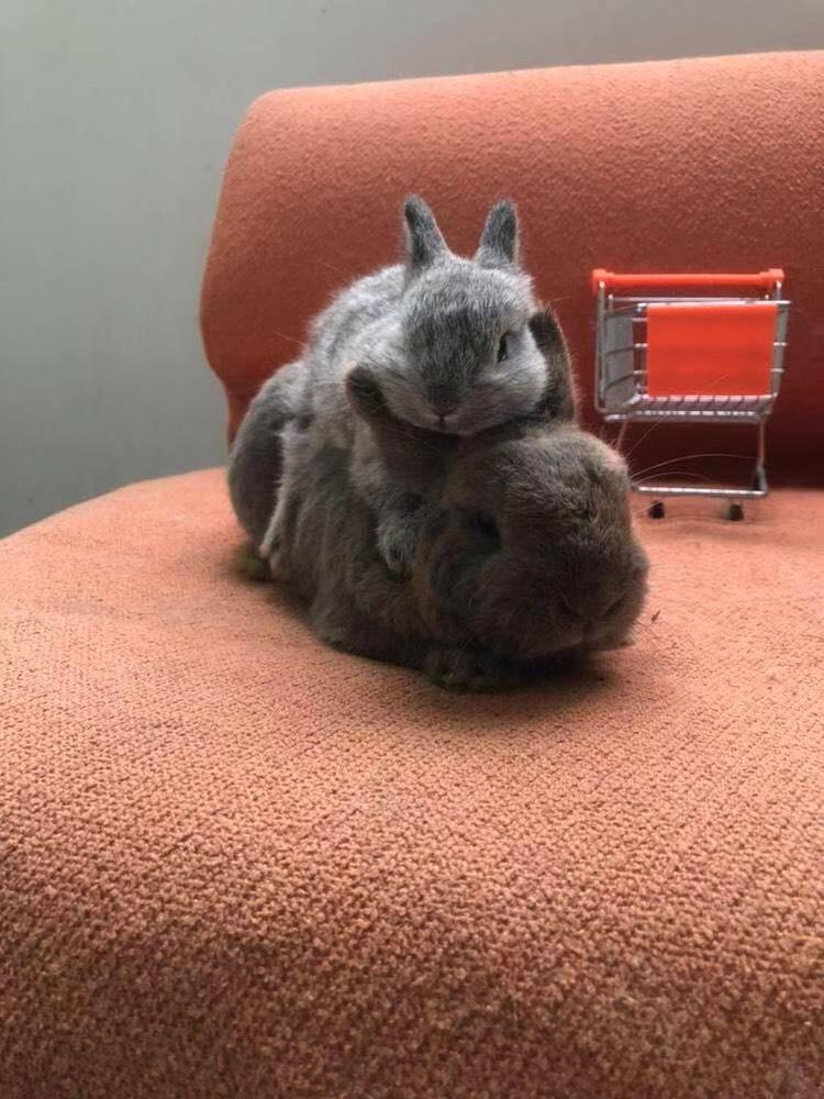 萌萌哒小兔子