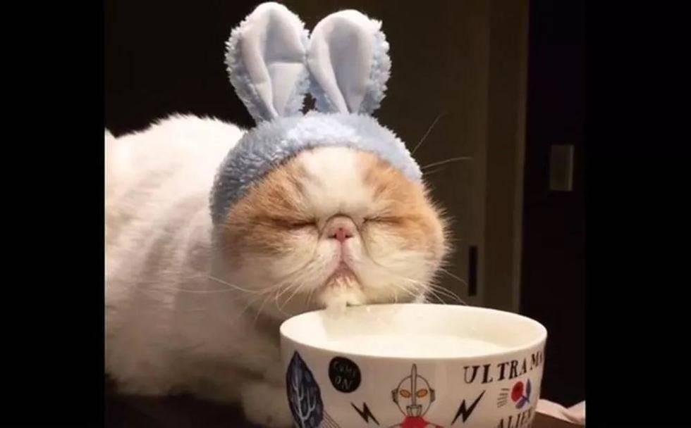兔子的药放在饮用水里?太天真了!