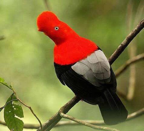 这鸟儿,有谁知道叫什么名字,长的有点好看。