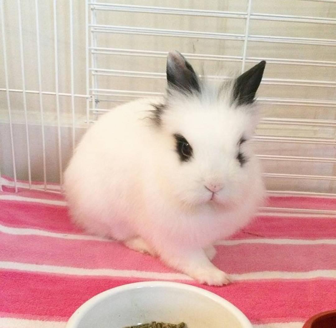 萌 兔子 头像 萌宠