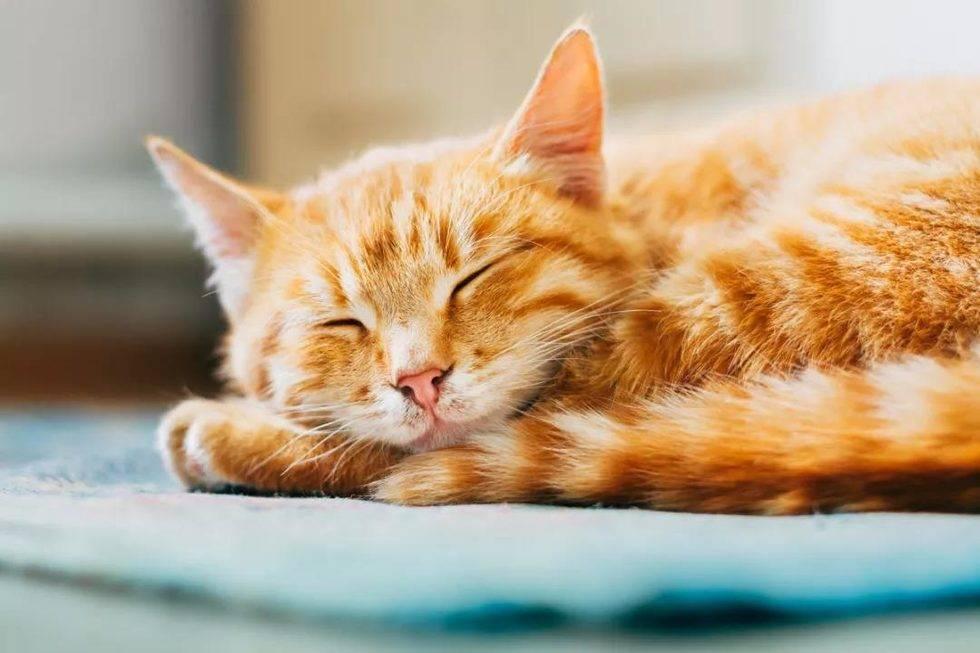 猫咪尿床怎么办?猫尿床是因为什么原因