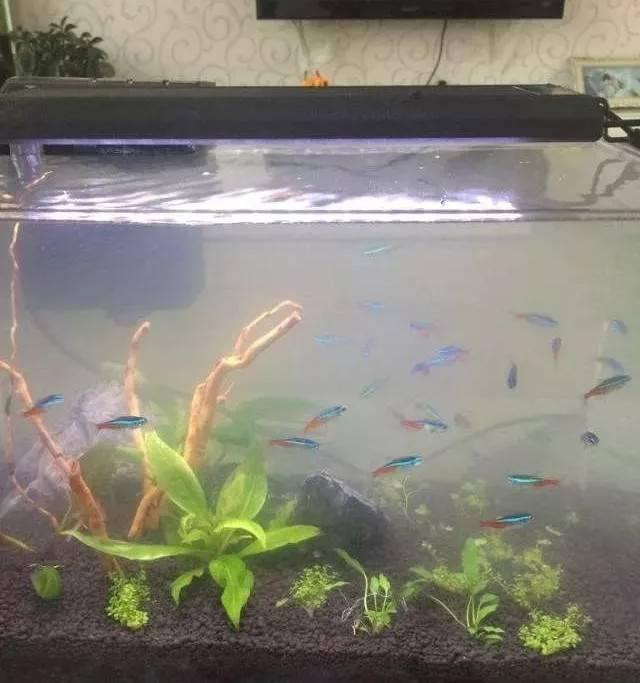 观赏鱼突然暴毙,换新水后水还是很浑,危险了!~