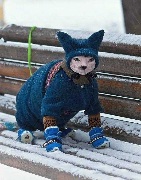 无毛猫的冬天…喵:哎卧槽,为毛要带老子出来…