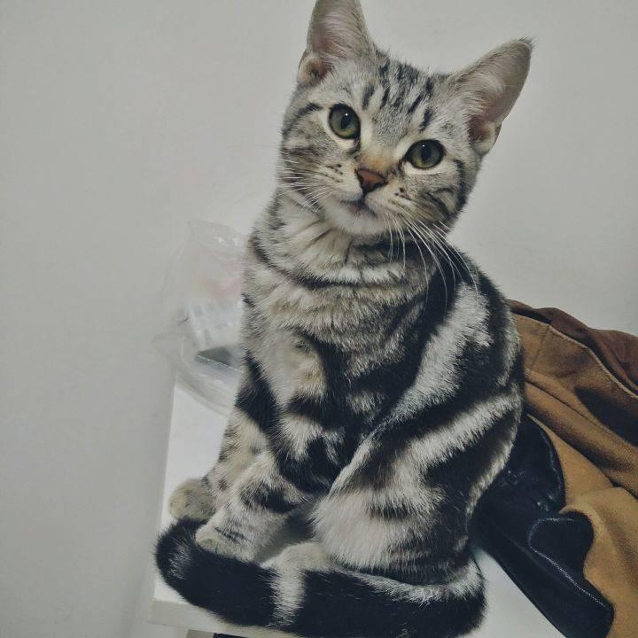 家里有两只虎斑猫。都是超级粘人的妹子。它们是一对从小分离,互不相认的亲母女。它们会因为争地盘打架,也会偶尔一起玩耍嬉闹。