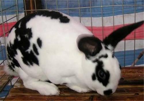 怎样预防兔子呼吸系统疾病