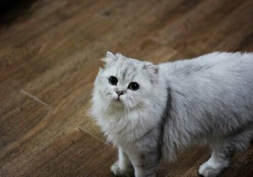 你的猫为什么爱吃塑料袋