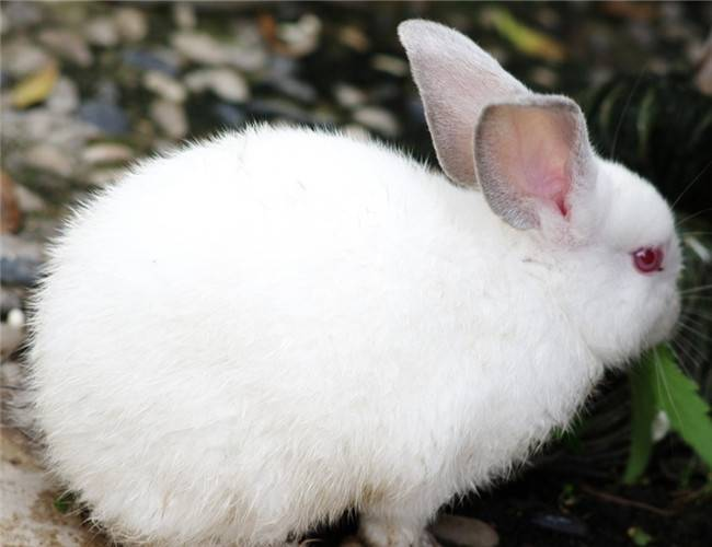 养兔子要注意什么?养兔子的常见问题大总结