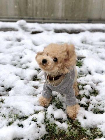 2019上海的一场雪,难得。狗子也激动的不行。