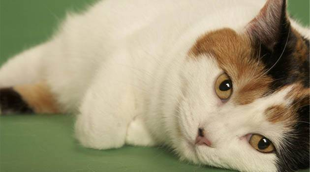 猫拉肚子吃什么药