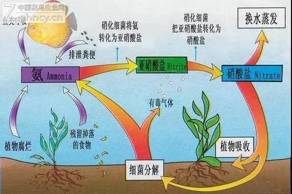 你对硝化细菌到底了解多少