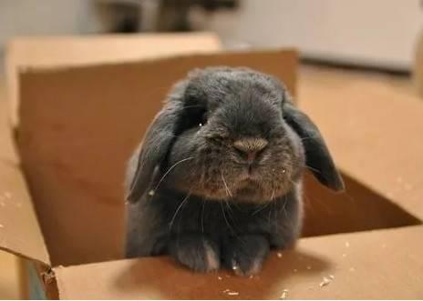 兔子突然不吃喜欢的食物了?