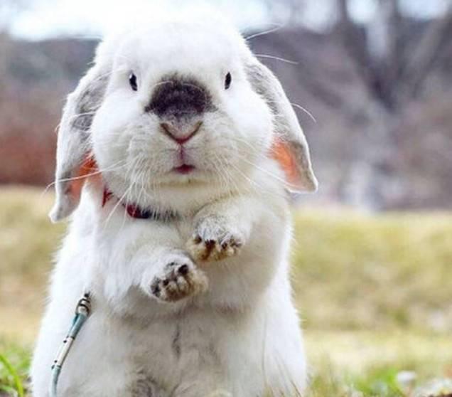 怎么带兔子去旅游?