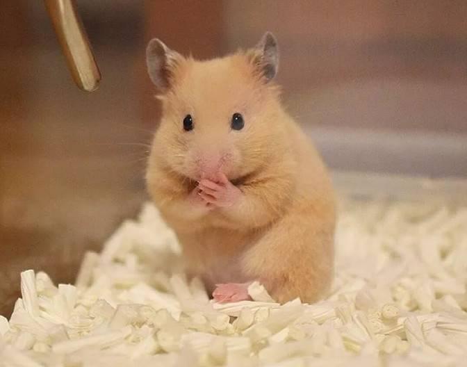 仓鼠冬天怎么养