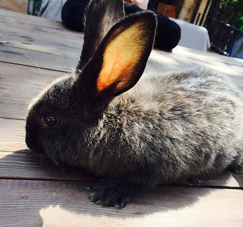 兔子拉稀了,需要给它水喝吗?