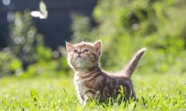 猫咪难道就是传说中的顺风耳