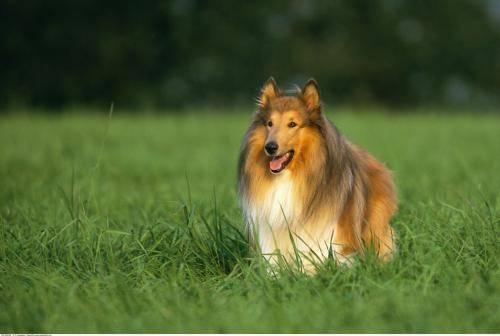 成年狗狗的饮食习惯有哪些不同