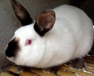 兔子一直在睡觉是怎么回事?