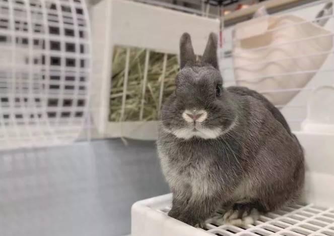 宠物兔子怎么养,养兔子铲屎官的每日功课表!