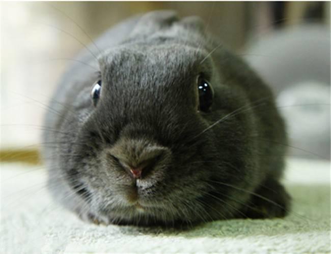 养兔兔前必须考虑的10大问题!