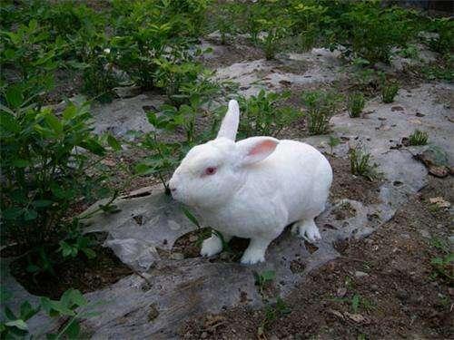 兔子要打疫苗吗?幼猫多大可以打疫苗