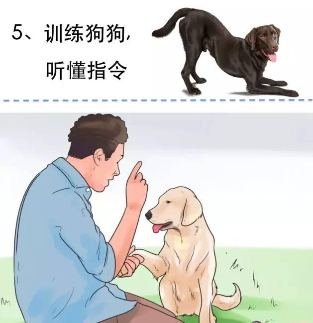 狗吃屎怎么办