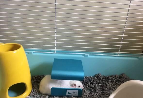 想养仓鼠,教你仓鼠怎么养不臭
