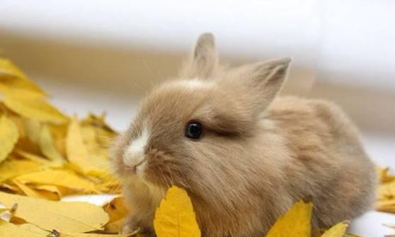 怎么训练兔子跟着你走