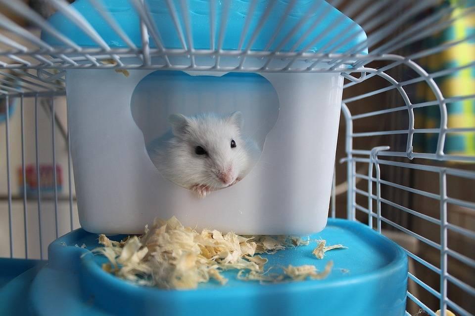 仓鼠也要自由