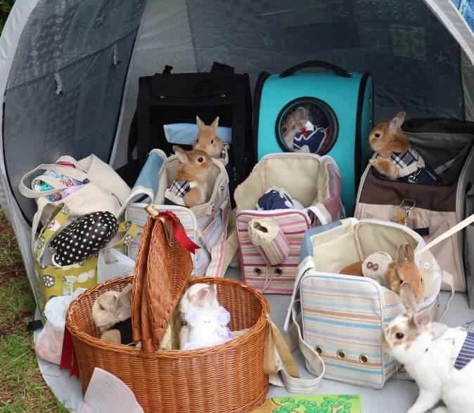 兔子出门遛弯必备物品有哪些?
