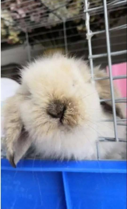 带大家撸一把小奶兔,无滤镜无美颜,纯天然素颜,真的有点可爱