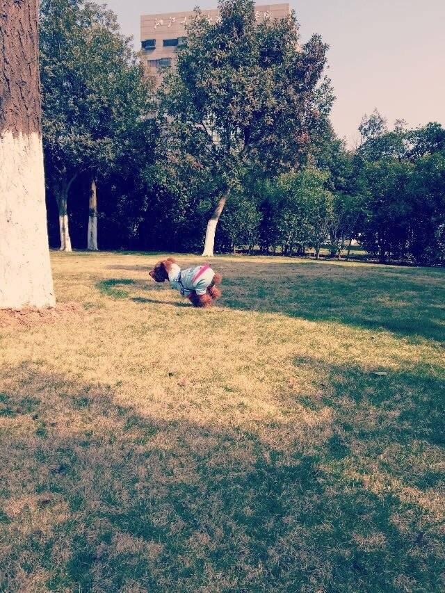 飞跑得像只兔子,自由自在的飞奔在草地上,多开心呀!伙伴们也一起来吧,运动起来身体健康哦!