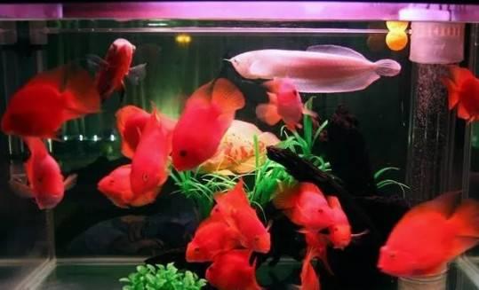 有了灯,观赏鱼在水中更美了!(附:部分鱼缸灯种类和使用简介)