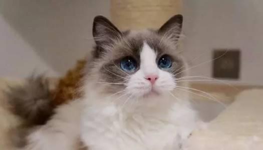 最受欢迎的猫咪排行榜,铲屎官们还不来选一选