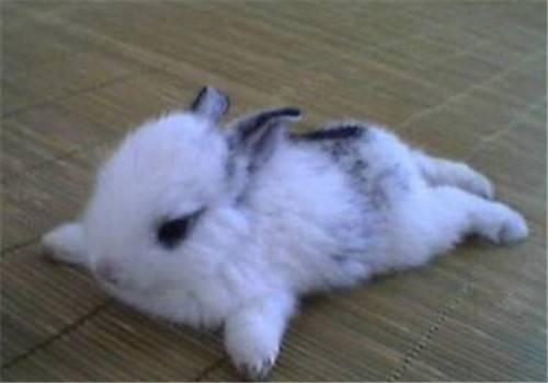 兔子身上有寄生虫吗