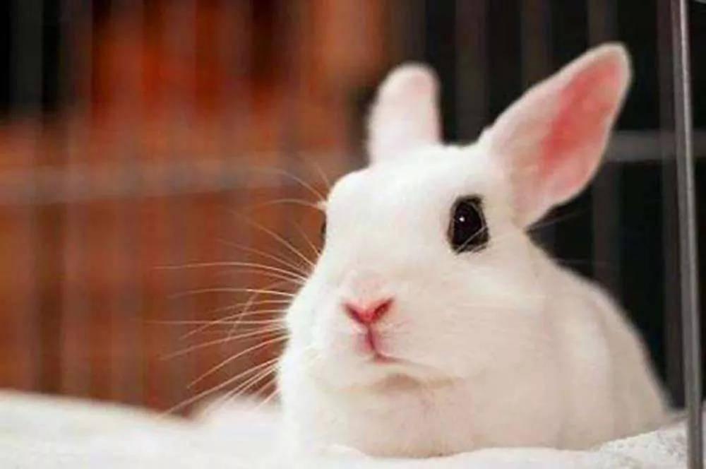 兔兔不爱吃草就多给点兔粮?不可以!
