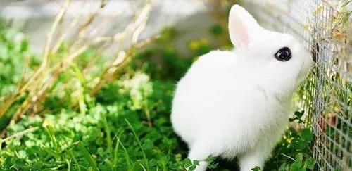 怎么判断兔子的年龄