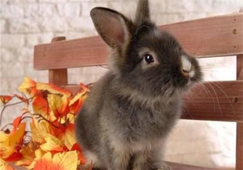 快递回来的兔子脏兮兮的能不能洗澡?