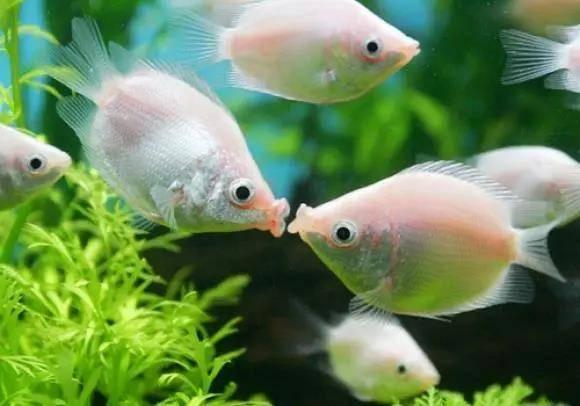 热带鱼怎么养,需要注意哪些事项