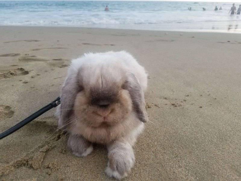 朋友回国没办法带兔兔回去~第一眼在群里见到他的照片就毫不犹豫地接回了我们家收养了他~大名狗豆兔~小名兔兔~2018年2月来到我们家的~现在4岁~会像人一样站着吃饭~全家人的宝贝