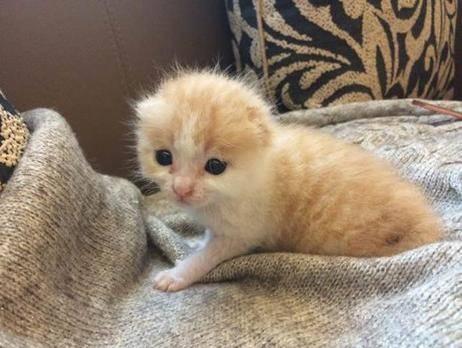 刚出生的小猫怎么照顾?一个月的小猫咪怎么养