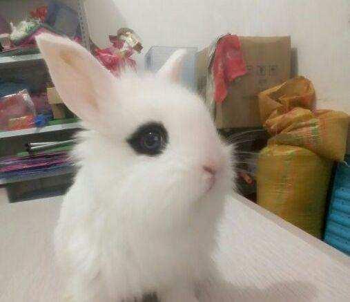 兔子能够认识主人吗?