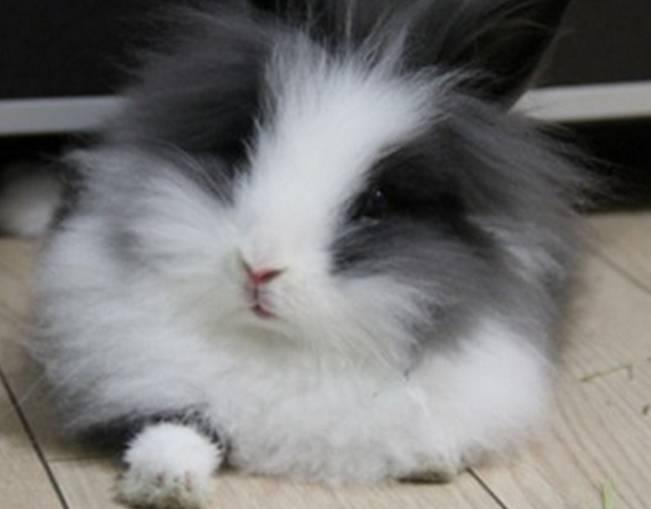 兔笼需要每天打扫吗