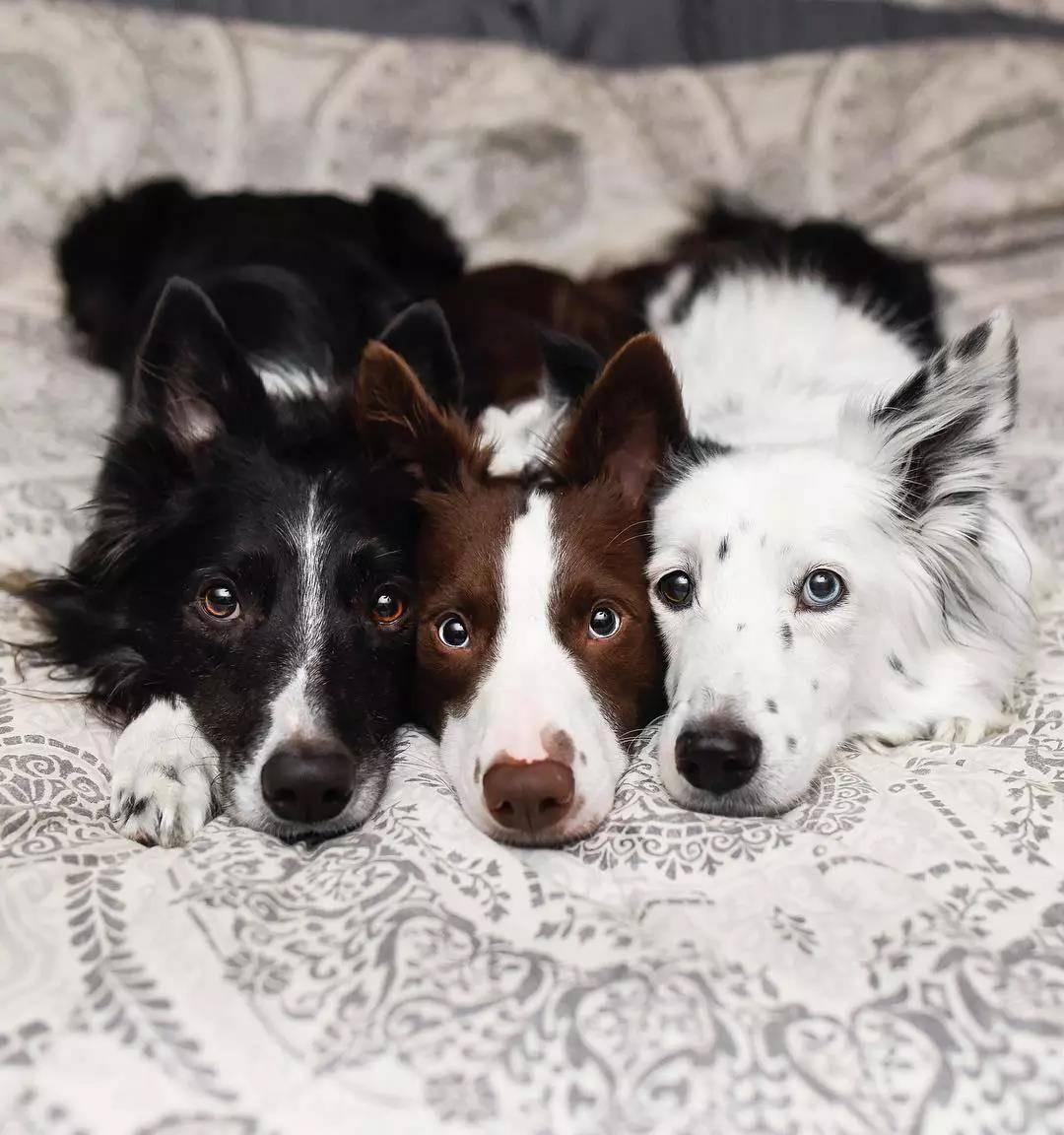 三只狗狗在一起秀恩爱,这画面我真的扛不住啊